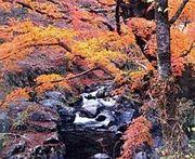 環境科学的にみた美しい日本語