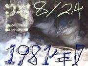 1981年8月24日 生まれ