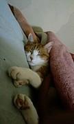 猫と二人暮らし