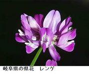 花を求めて(岐阜県とその近辺)
