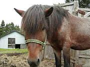 お馬さんの前髪