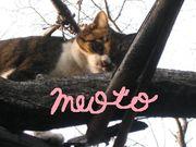 meoto