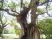 やさしい樹♪
