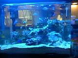 熱帯魚 海水魚仲間募集