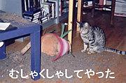 ★おべめんの会★
