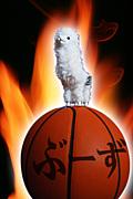 バスケットボール   Boo'z