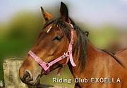 乗馬クラブ エクセラ