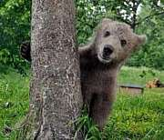 北海道の熊を守る会