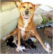 初心者のための繁殖講座【犬】