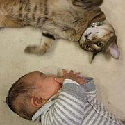 ■猫と子どもと楽しく暮らそう■