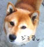 関西地味犬の会