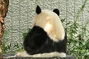 笹を食べないパンダ組