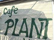 CAFE  PLANT