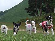 青森★東北 チワワ&犬好き
