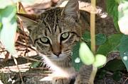猫まんま 【大分にゃん】