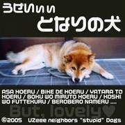 うぜいい 隣の犬