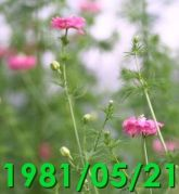 1981/05/21 (Thu)