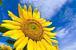 Sunflower 大阪・神戸・京都