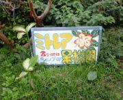 ミトレア果樹園キャンプ場(西表)
