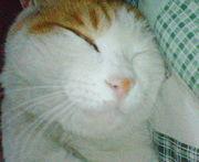 猫の「もち」
