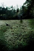 our broken garden