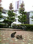 神奈川県立麻生総合高等学校