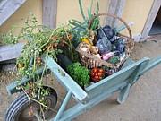 Four seasons Kitchen