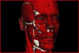 Artistic Anatomy〔美術解剖学〕