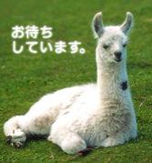 *幸恵誕生日会@11/26(日)*