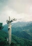 山NOBORU