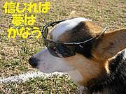 Disc★小型犬★Dog