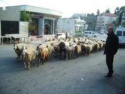 パレスチナ留学・滞在・旅行