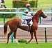 ガリアーノ(競走馬)