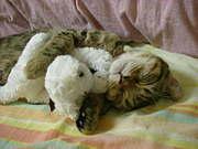 猫大好き@台湾
