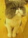 猫好きの輪♪
