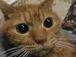 愛猫を若年性腎不全で亡くした