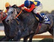 有馬記念の4番人気