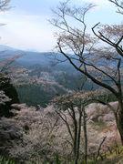 奈良出身の名古屋人