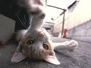 【塾馬競式猫】