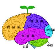 右脳ベンチャー