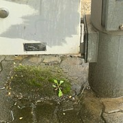 路傍の苔が好き♪