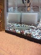 吹田の熱帯魚好き