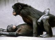 †01 Monkey's†