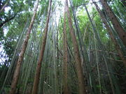 放置林をやっつける!