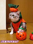 猫服・犬服 o(*^▽^*)o~♪