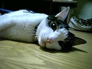 ☆★死ぬほど猫が好き★☆