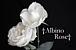 †Albino Rose†