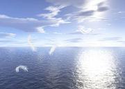 東海のヒーラー