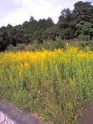 2006年度ベビィ in奈良
