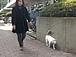 猫との散歩は楽しい